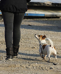 Adiestrar perros en barcelona.jpg