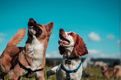 adiestrar perros en barcelona3.jpg