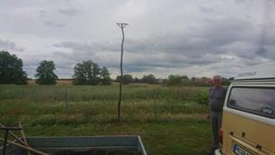 Greifvogelstangen errichtet