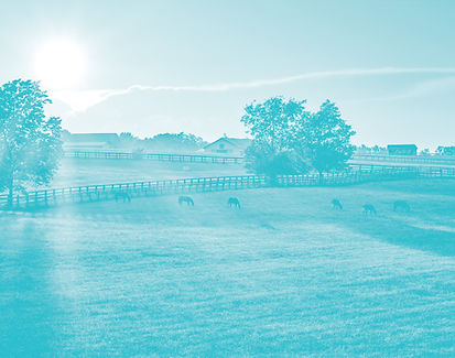 mcih-ky-horses.jpg