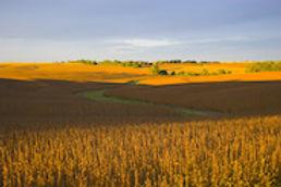 Nebraska_WebImage_2.jpg