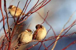 Wisconsin_WebImage_3.jpg