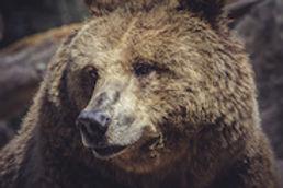 Montana_WebImage_3.jpg