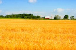 Indiana_webImage_1.jpg