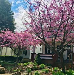 Spring-2019_Lisa-Boggs