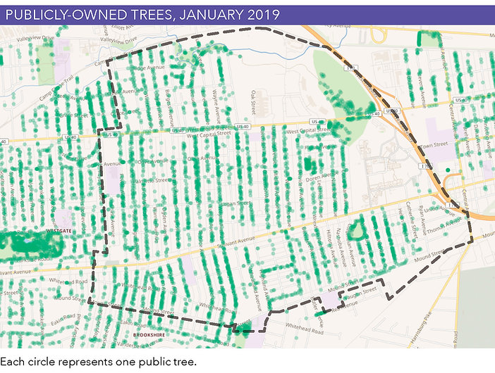 Public-Owned-Trees_map.jpg