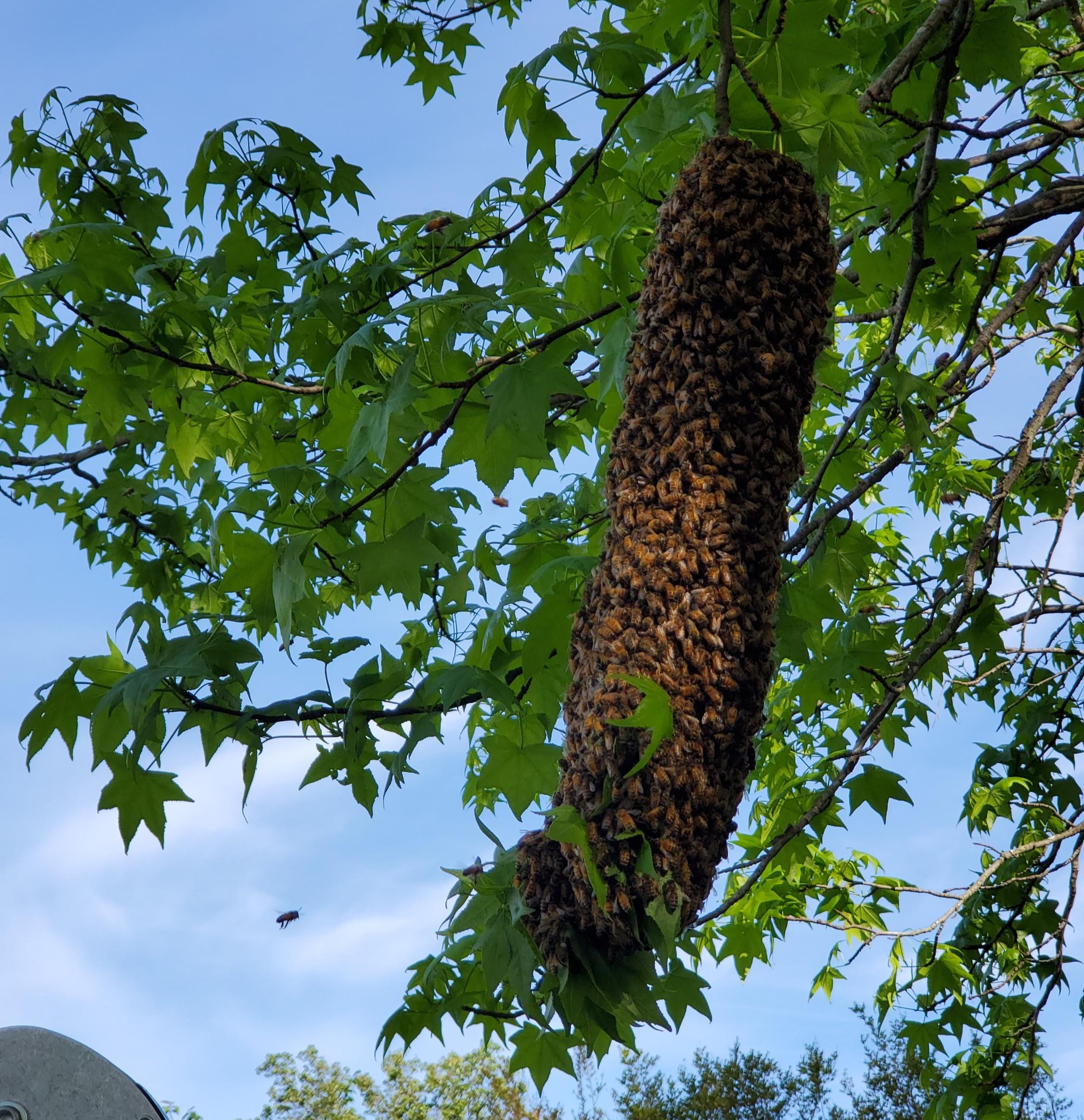 BEES and WASP