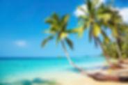 PIC-TROPICS - Palm Trees on Beach.jpg