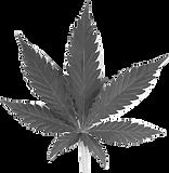 marijuana-leaf 3.png