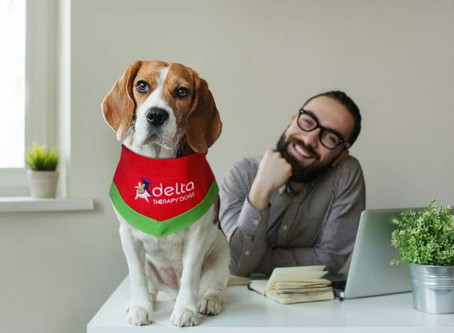 Therapy Dog Month