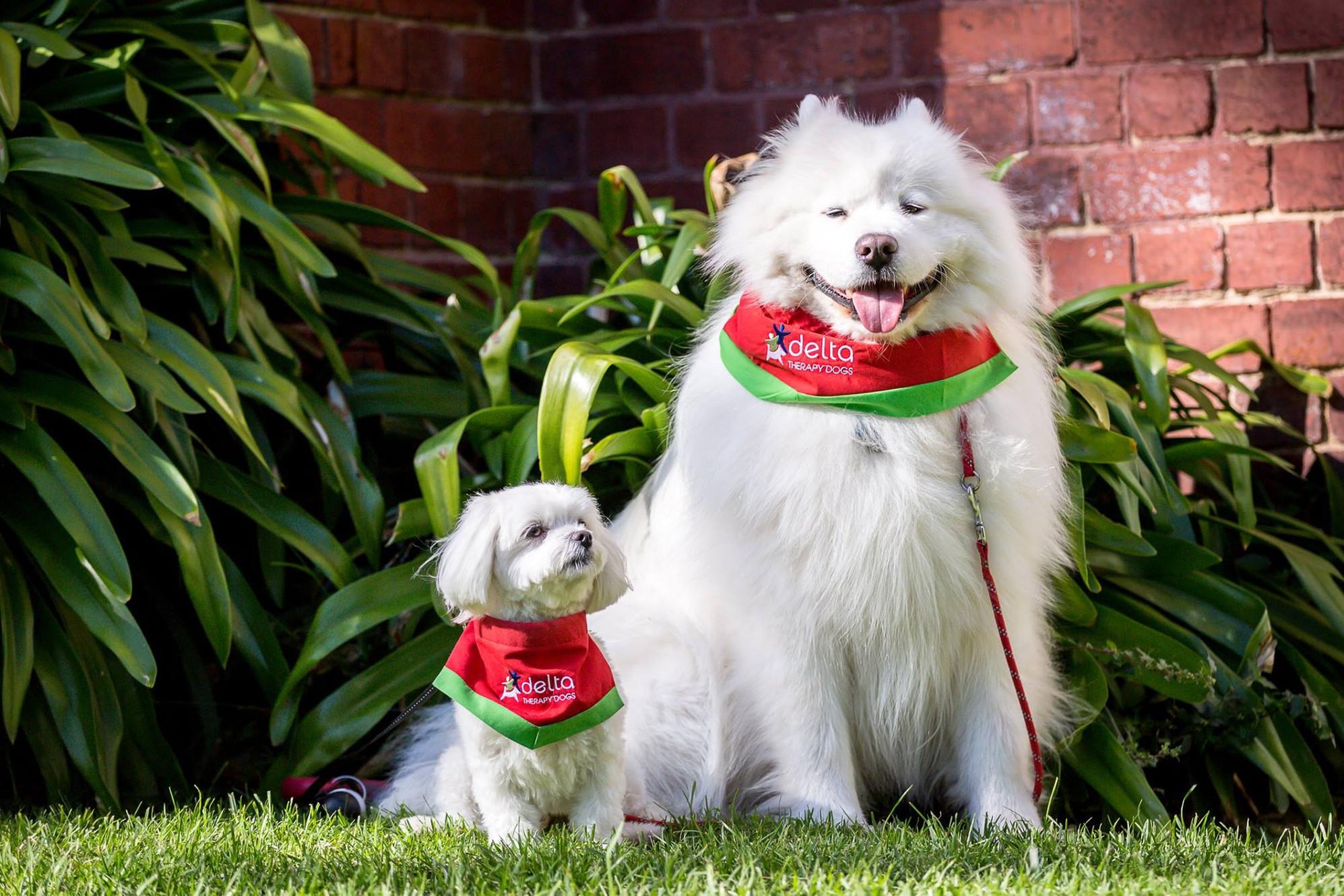 Delta Therapy Dogs Australia Delta Society