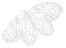 Butterfly 4b.png