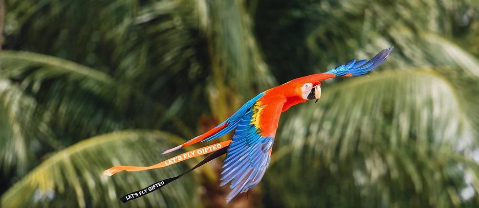 Parrot 1_1.jpg