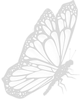 Butterfly 2c.png