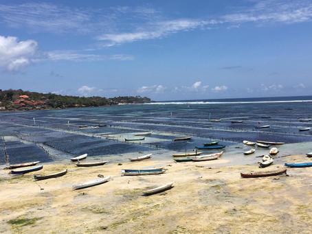 Seaweed saving the world