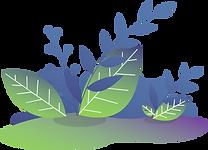 Kiwi-Plants.png