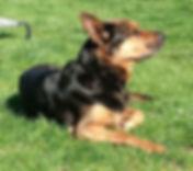 Kasse enjoying the sun on lawn