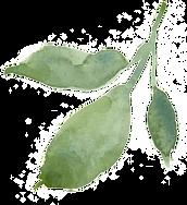 hand-painted-leaves-transparent-decorati