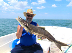 Nice mid June Cobia 2014