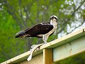 Bird Watching Wilmington NC