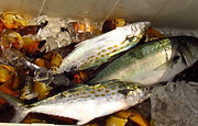 Seafood Wrightsville Beach NC, Fishing Charters Wrightsville Beach NC, Family adventures and fun Wrightsville Beach NC