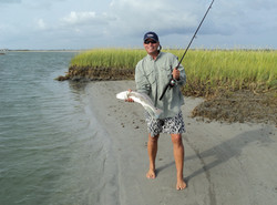 Red Drum on live mullet.