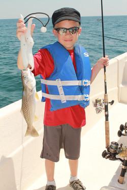 Grey trout,