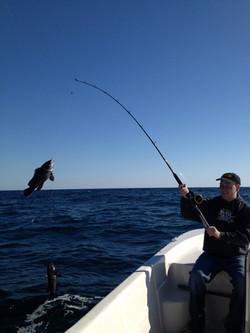 Black Sea Bass May 14, 2013