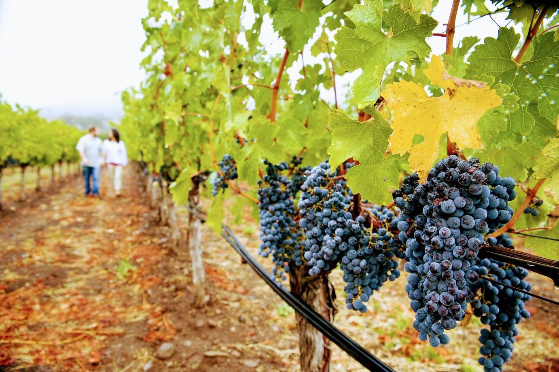winery tour corfu.jpg