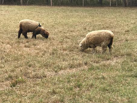 Breeding Season! Oh My