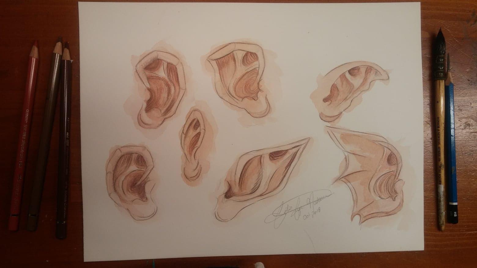 Études anatomiques