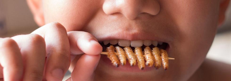 dreng spiser insekter.jpg