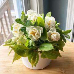 small vase - mid April