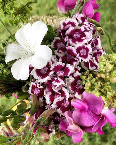 hardy annual flowers