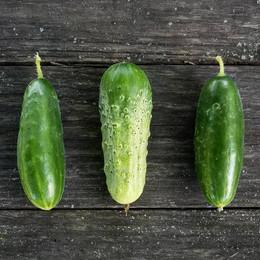 Addis pickling cucumber