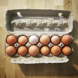 egg diversity