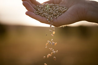 A-Harvest-of-Righteousness.jpg
