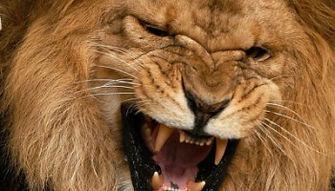 roaring-lion-e1421009873975.jpg
