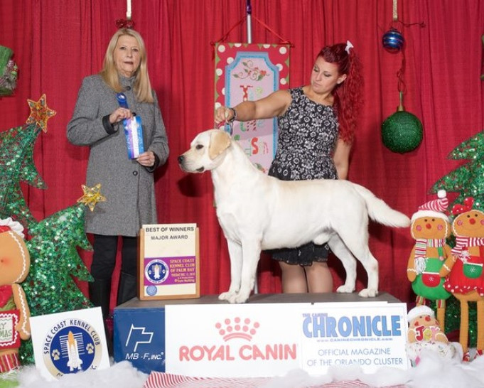 Pub Royal Canin WD & BOW