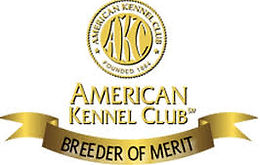 Chambray Labradors top AKC Breeder Of Merit
