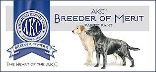 Chambray Labradors AKC Breeder of Merit