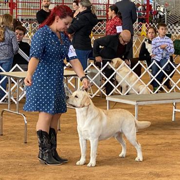 Puppy 2 Davie show