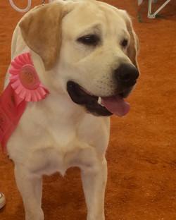 Tank'd Wins Best Puppy In Show