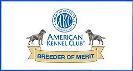 Chambray Labradors top AKC Breeder Of Merit