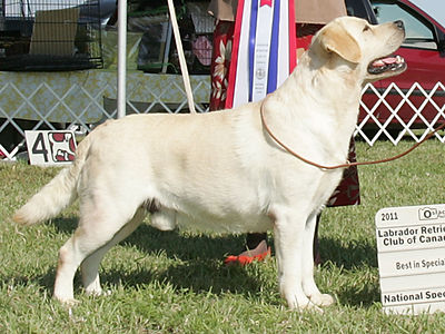 Potomac Best Of Breed Winner & 3 time Canandian Nationals winner