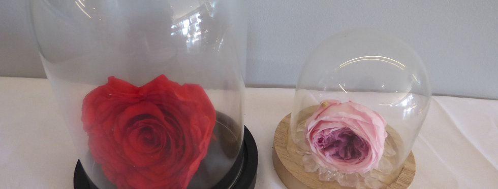 ROSE ETERNELLE CLOCHE
