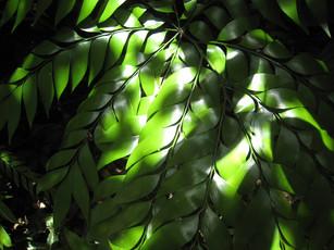 Leaf.1 copy.jpg
