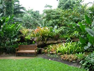 Garden.2.2.jpg