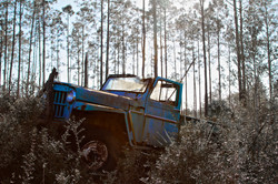 Old Truck in the Pines