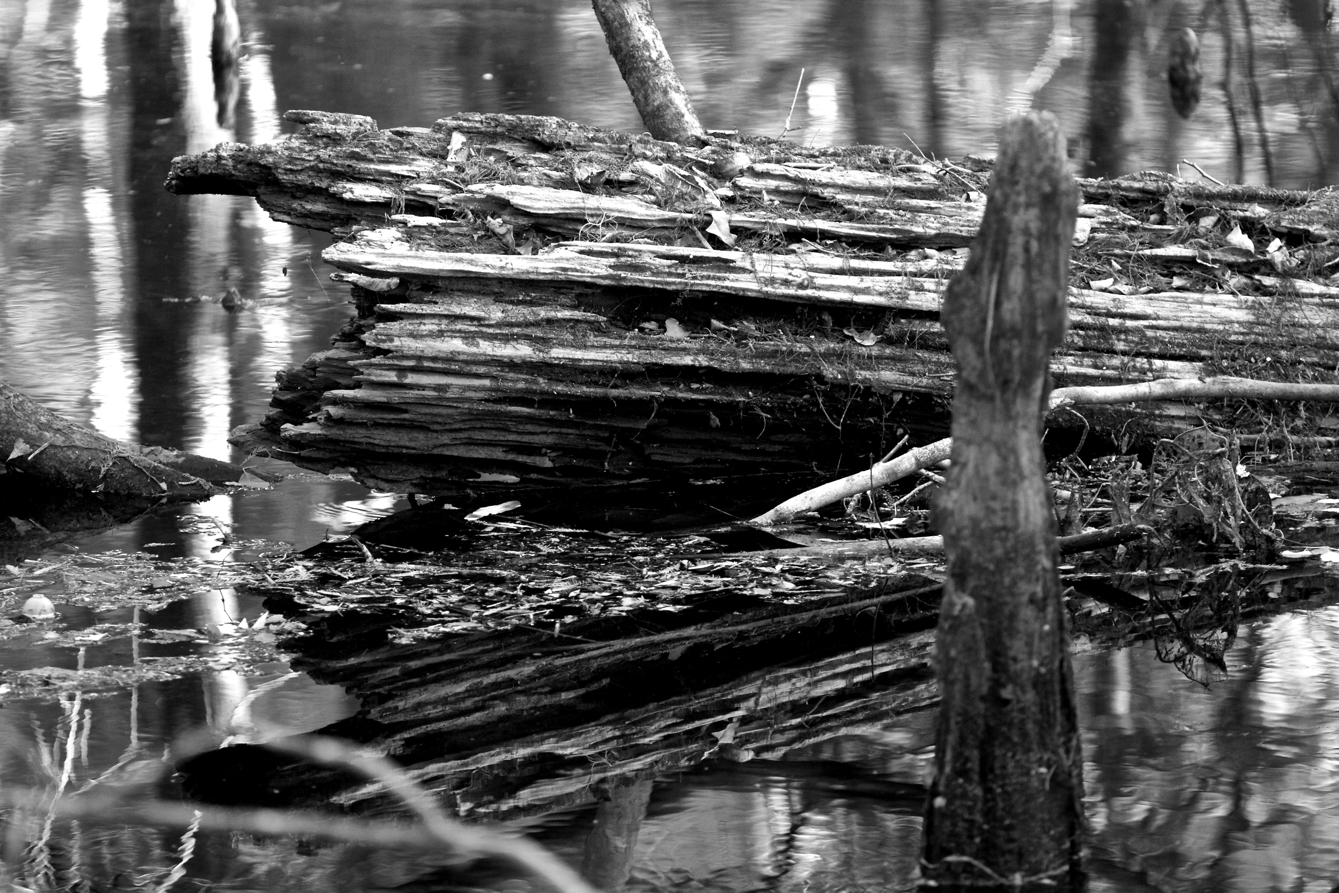 Log in Swamp